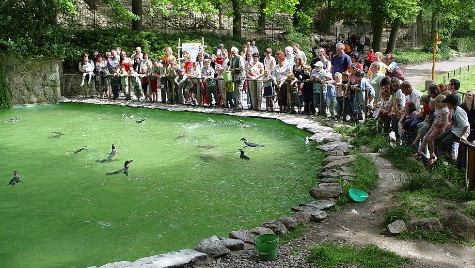 Penguins feeding time © Zoo Schwerin/Erika Hellmich